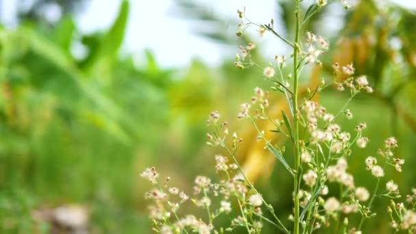 Místo Dolly snímku suché bílé malé květiny v přírodě