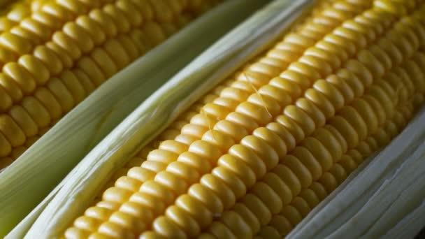 Zblízka záběr čerstvé sladké kukuřice, s přirozeným slunečním světlem, vysokým vitamínem ovoce a zeleniny