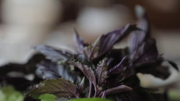 Čerstvá zelenina a zelenina na talíři. Listy bazalky, paprika, nakrájená rajčata.