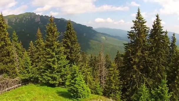 Jehličnatého lesa v evropském Karpaty