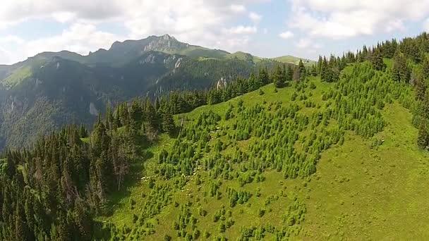Sheep flock in Ciucas Mountains, Romania