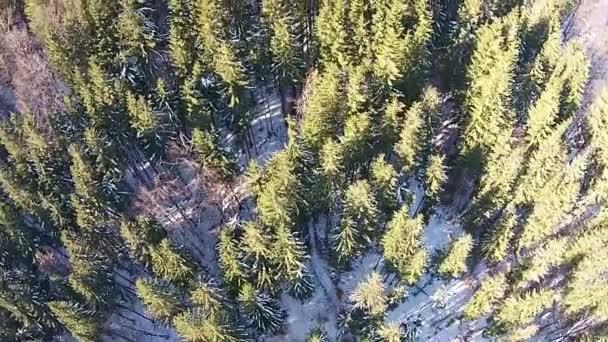 Zimní les přeletět