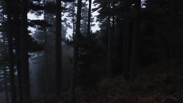 Dark forest with big tall trees and a thick fog on a mountain in winter.