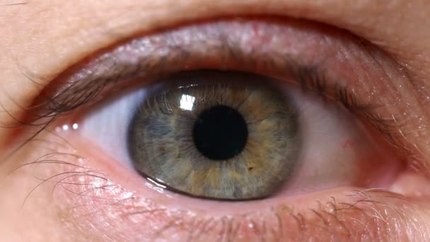 Close-up human eye eyes narrowed pupil. Eye iris.