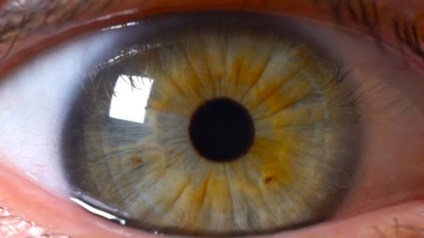 Extremally close-up of the human eye, eye iris, the pupil of the eye widens.