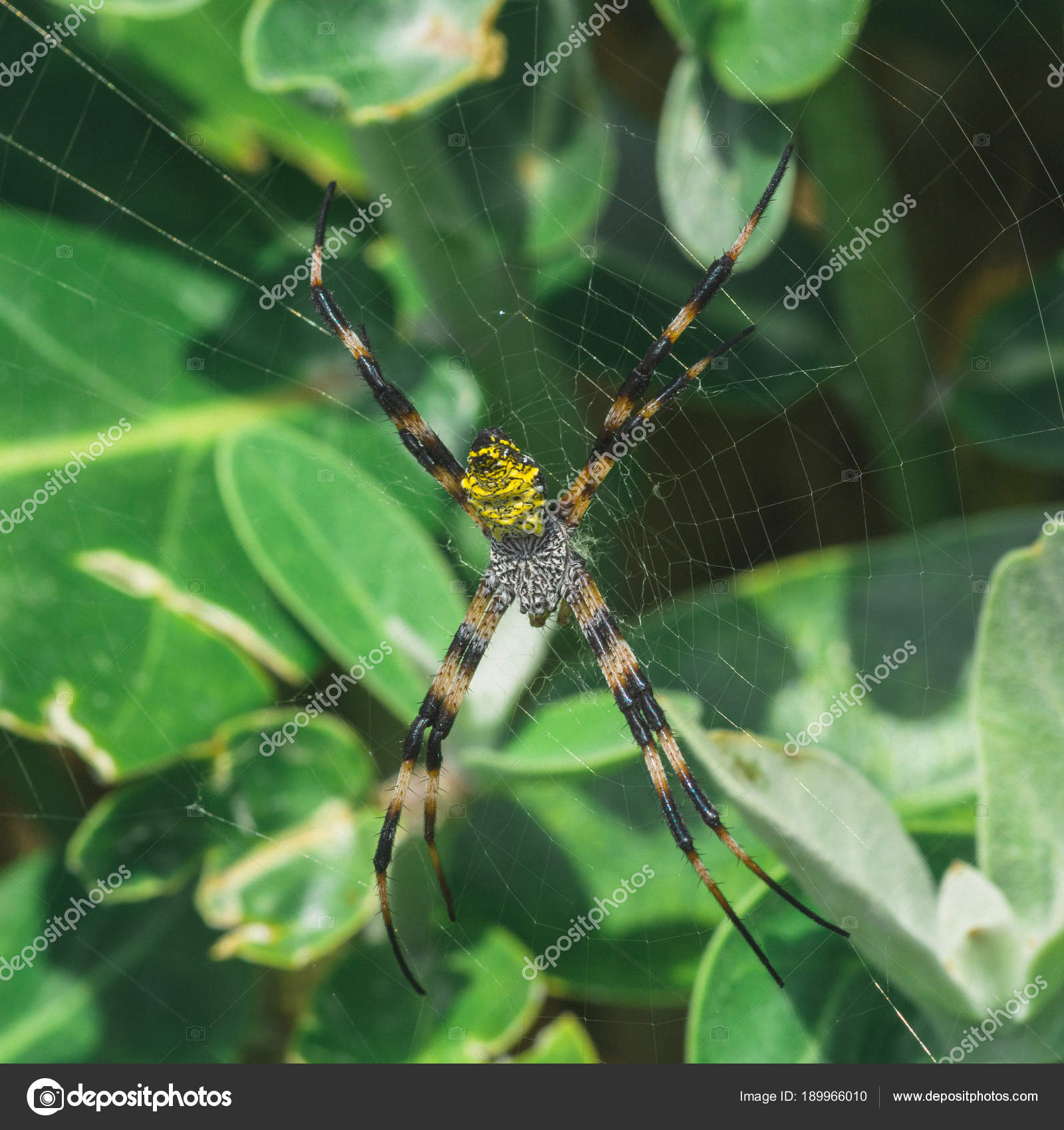 Yellow Hawaiian Garden Spider U2014 Stock Photo