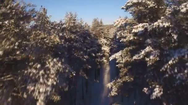 Krásný letecký pohled na zasněženém lese