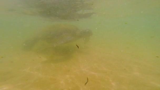 Mořská želva ve vodě. Mořský život.
