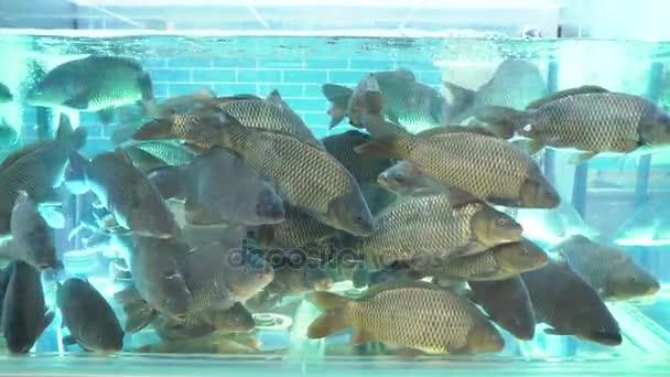 Az akvárium a halak piaci nagy ponty