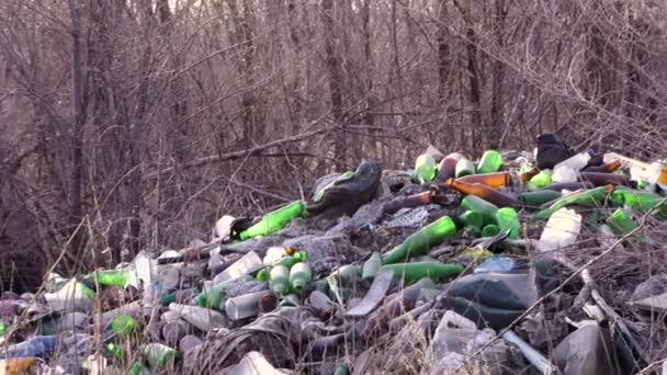 odpadky v lese. Ekologie lesa. znečištění