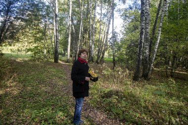 Autumn. A lady in a black coat with a red collar stands and holds yellow leaves against a background of birches