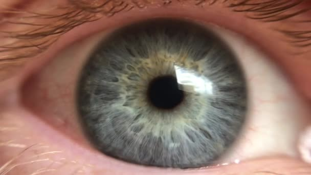 Macro close up of blinking grey male human eye retina.