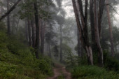 green forest and fog