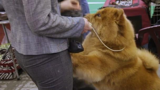Resultado de imagen para chow chow dog treat