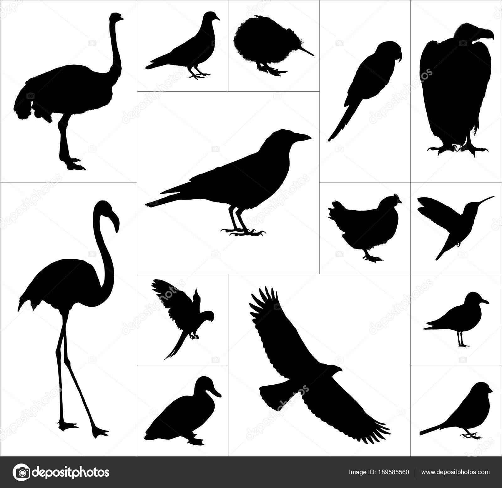 Μεγάλο πουλί κακοποιούς
