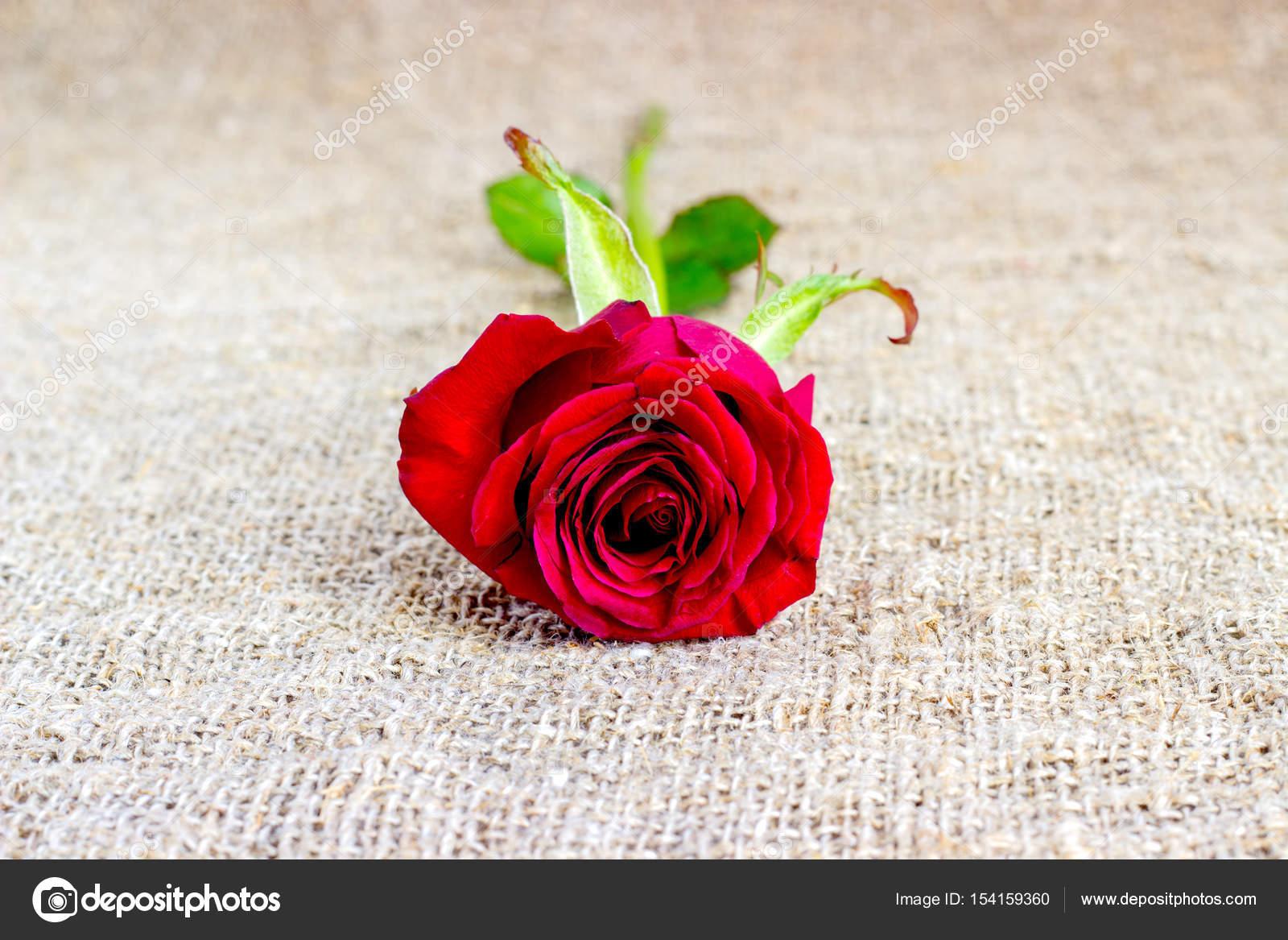Romantische Rote Rose Hintergrunde Muttertag Hochzeitseinladung