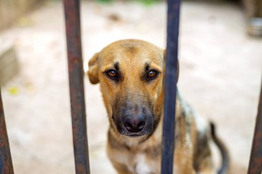 Dogs in an animal shelter waiting to be adopted. Selective focus