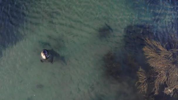Egy fóka nyugszik a kék lagúnában. Izland