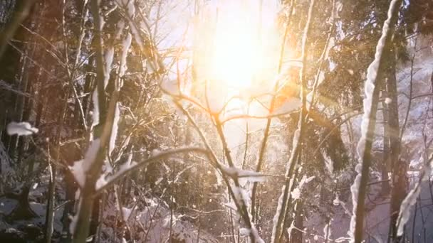 Sněžné zimní stromy. Sněžný les v zimním čase, slunce svítí v zimních lesích. Sluneční světlo v lese.