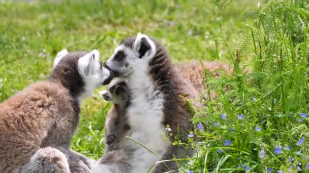 close-up view of lemur animals in the zoo