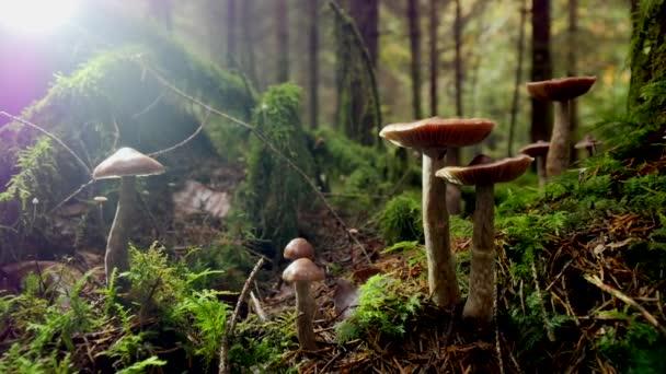 Blick auf Pilze im Wald verlieren