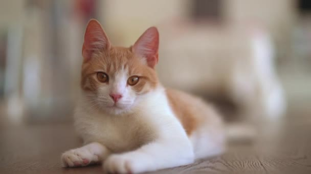 cute white and red cat relaxing