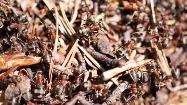 close-up view of brown ants moving in ant colony, selective focus