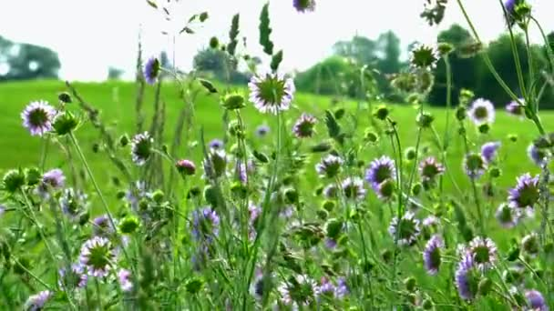 field with beautiful blooming flowers and green grass at sunny day, close-up view