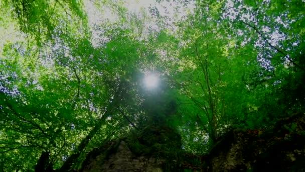 nízký úhel pohledu na slunce zářící zelenými listy v lese