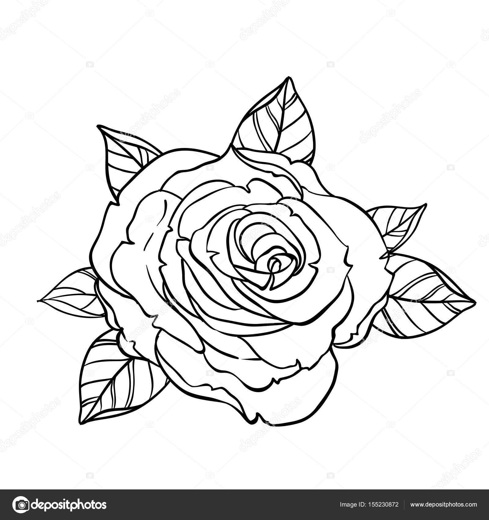 Rose Bianche Disegno Da Colorare Coloratutto Website