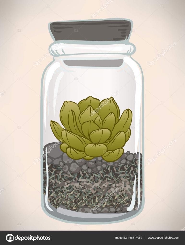 Sukkulente in Glas terrarium — Stockvektor © vgorbash #168874062