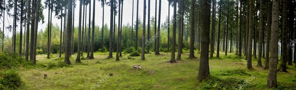 Фотообои Beautiful forest panorama