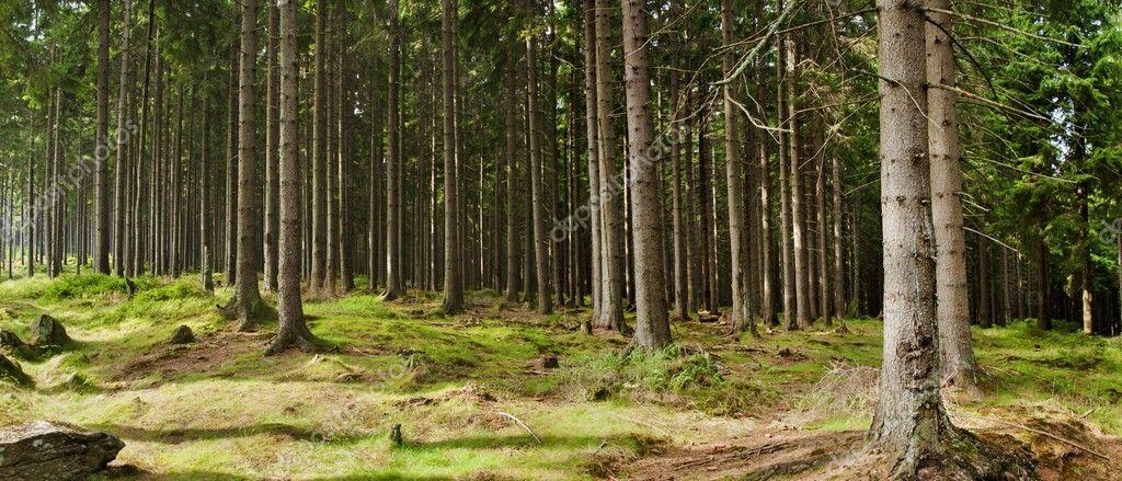 Фотообои Beautiful forest panorama