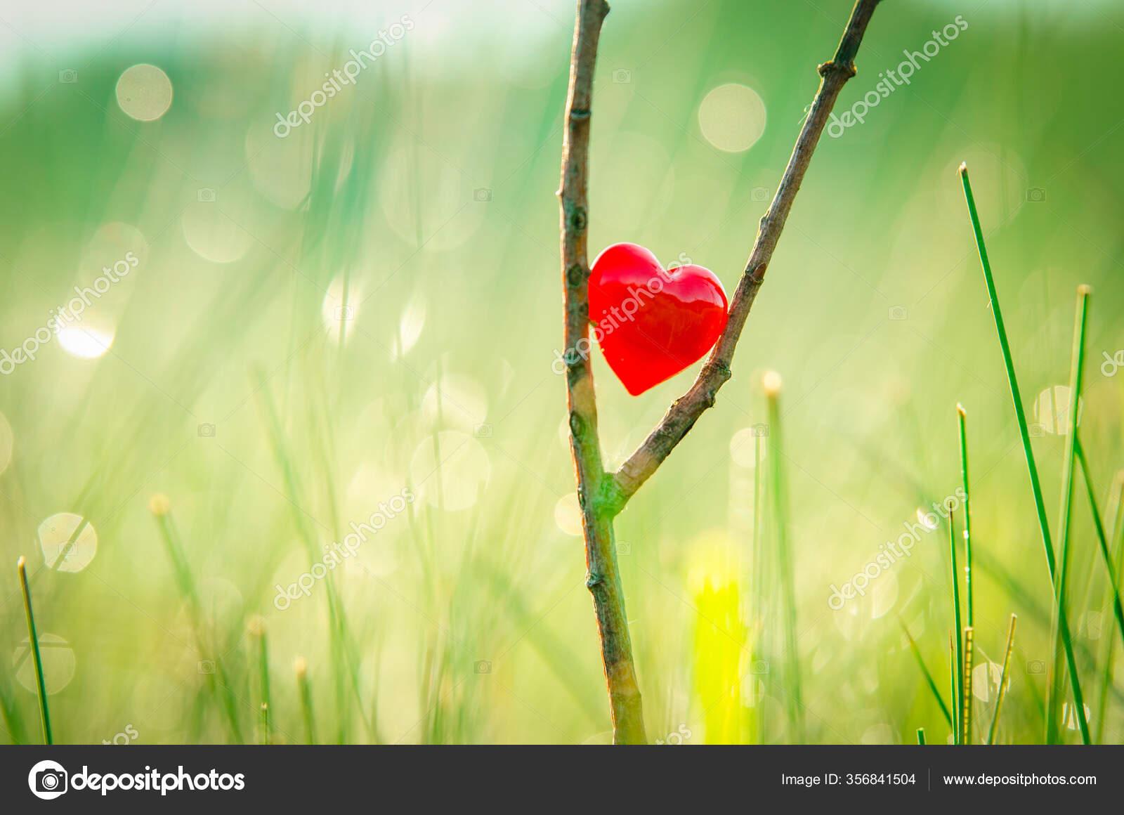 Red Heart Nature Wonderful Morning Drops Background Beautiful Light Original Stock Photo Image By C Kovop58 Gmail Com 356841504