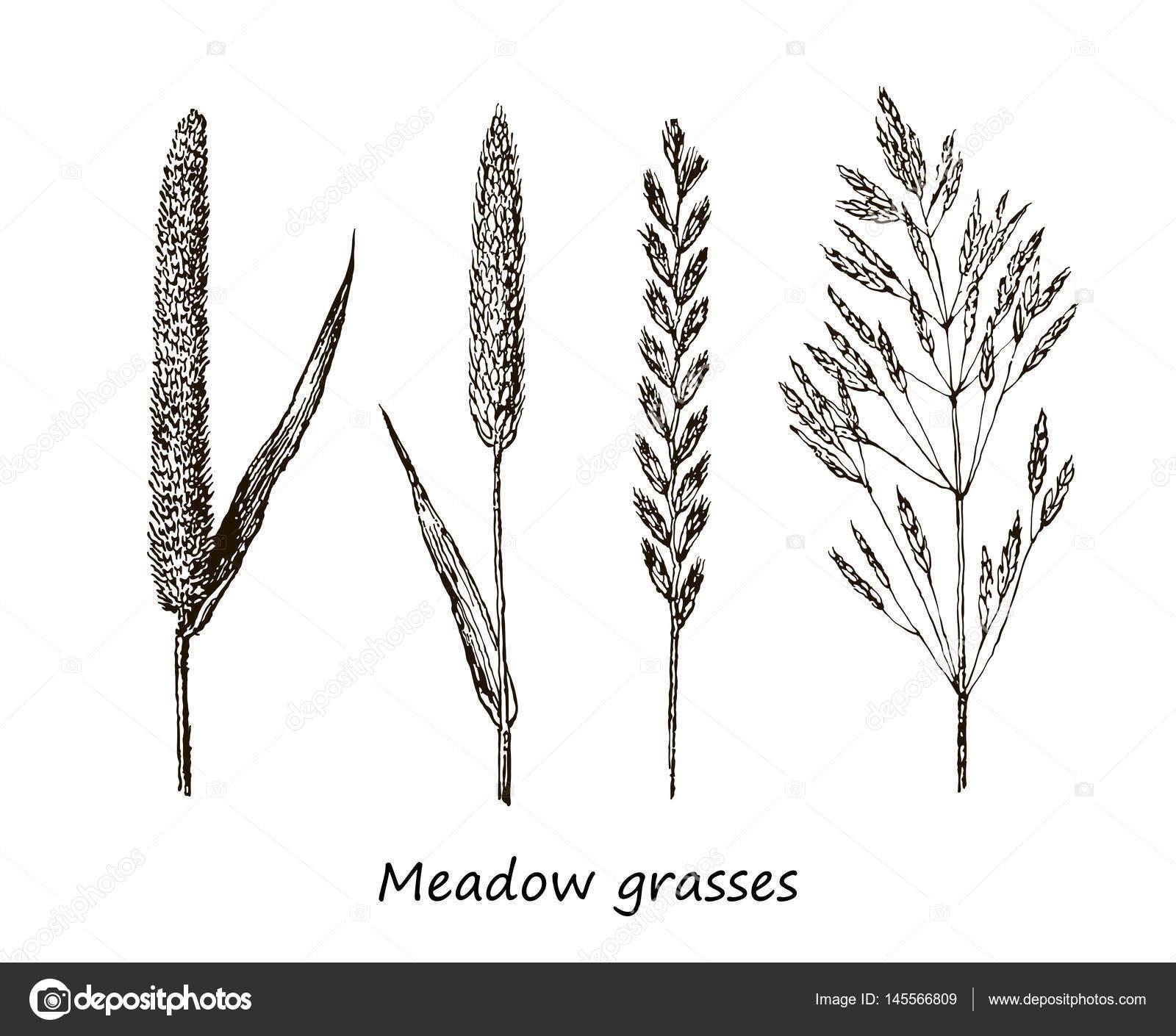 Favoriete Set inkt tekenen van granen, wilde planten, kruiden van het veld  FX08