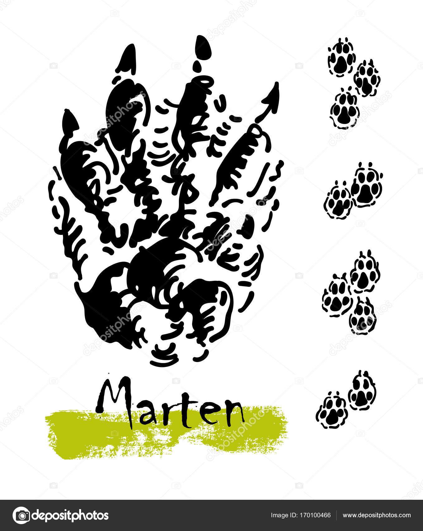silhouetten von spuren von wildtieren. spuren der marder. vektor