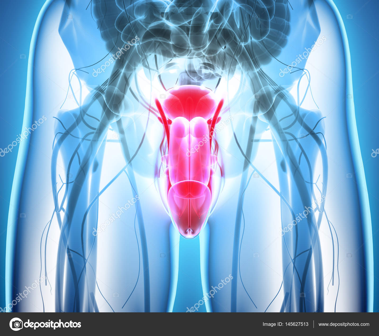 Fortpflanzungsorgane männlich, medizinische Konzept — Stockfoto ...
