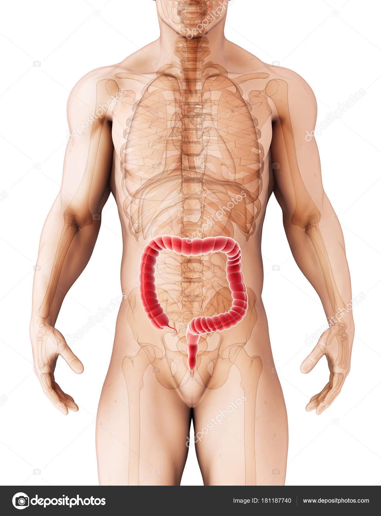 Толстая задница болезнь африка