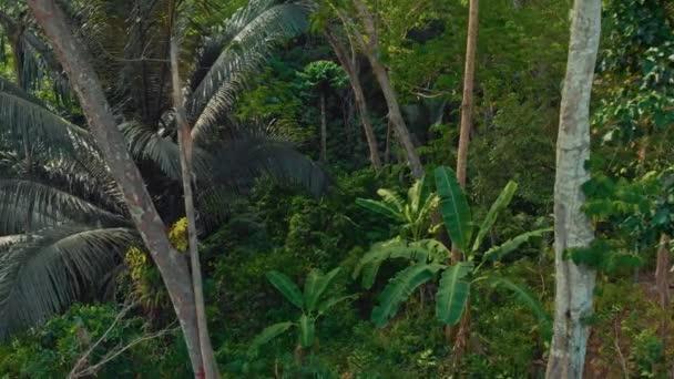 Tropischer Dschungel auf Phuket in Thailand 8