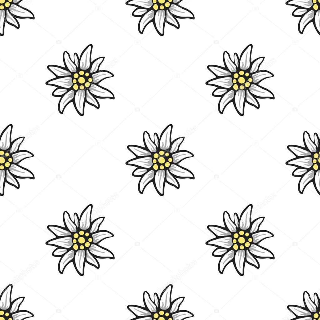Edelweiss flower seamless pattern background texture