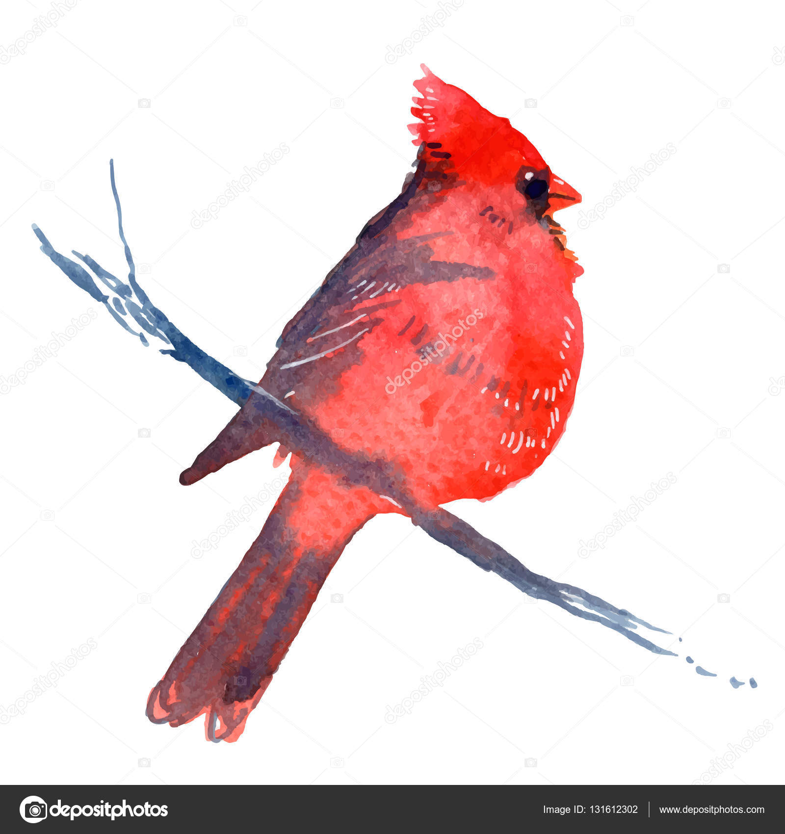 cardinal bird sitting on branch u2014 stock vector mazeina 131612302