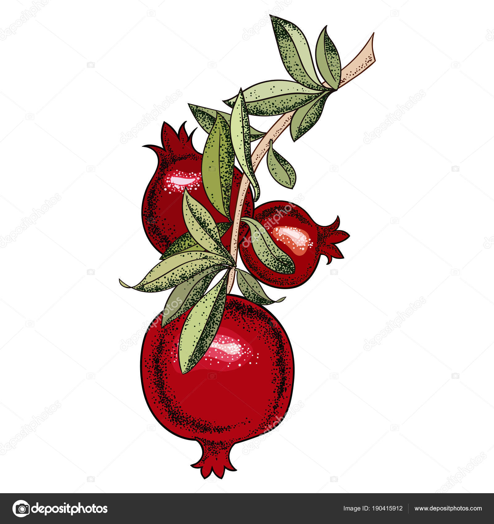 Vintage Pomegranate Tree Vector Illustration Vector Image By C Mazeina Vector Stock 190415912