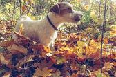 Venčení na slunečný podzimní den venku. Sezóna podzim