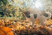Pes venku v podzimním parku. Na podzim