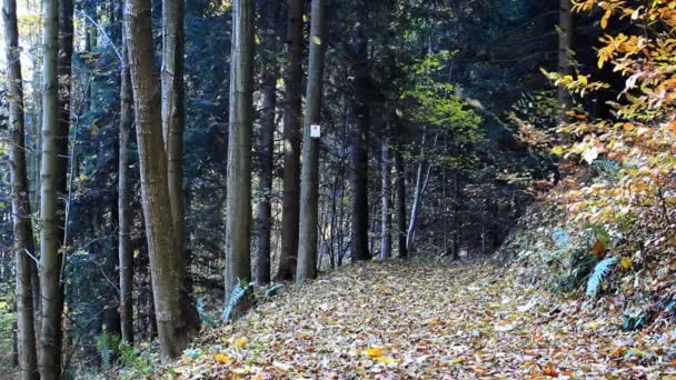 Autumn leaves falling. Colorful fall season.