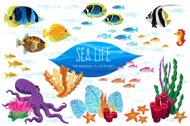 set of sea animals and seaweeds