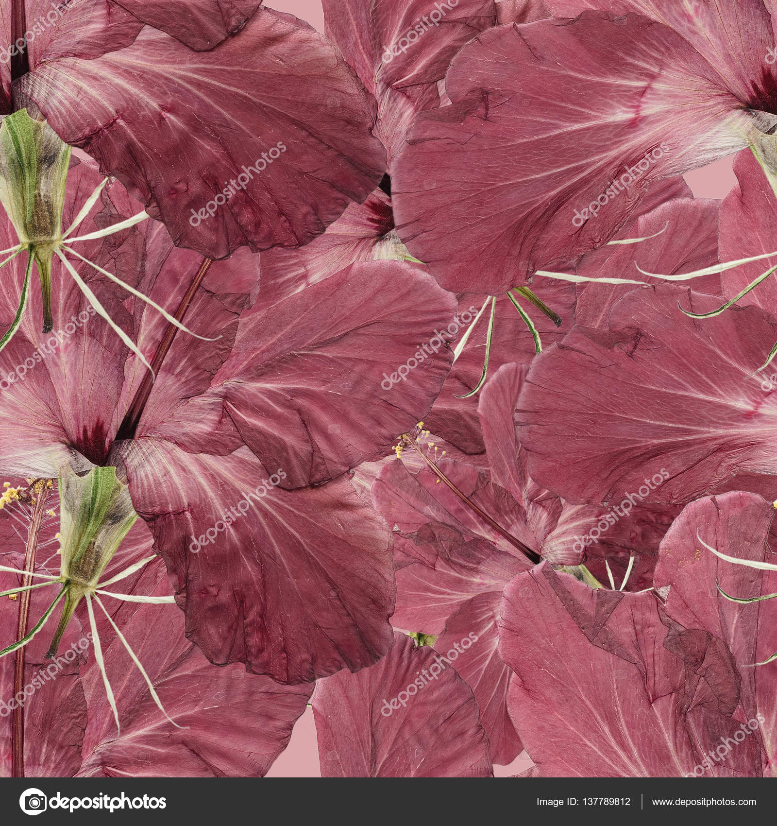 Hibiscus seamless pattern texture of pressed dry flowers stock hibiscus seamless pattern texture of pressed dry flowers stock photo izmirmasajfo