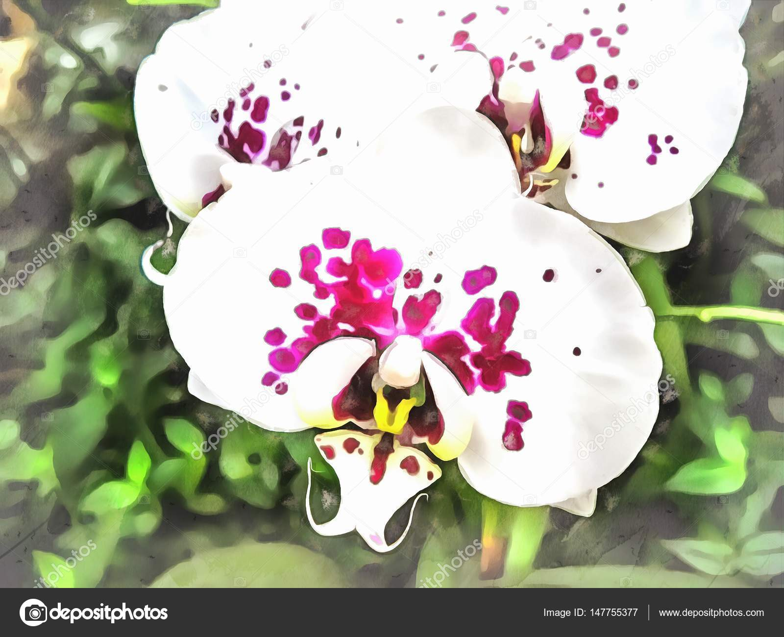 Watercolor pattern tropical flower white, maroon Orchid. — Stock ...