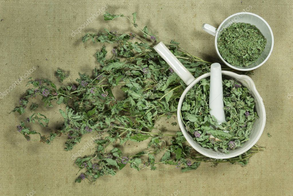 Mint, spearmint. Dry herbs. Herbal medicine, phytotherapy medici