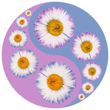 Floral symbol Yin-Yang. Daisy, marguerite. Geometric pattern of